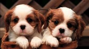 Avellino: ordinanza cani
